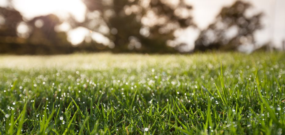 Tips on watering your lawn in Victoria, BC